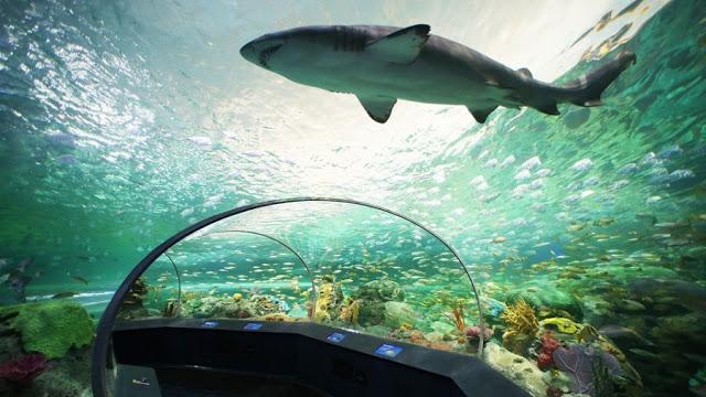 Tanque de tubarões do Ripley's Aquarium of Canada