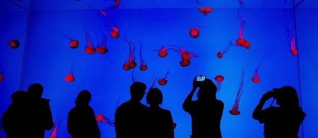 Show de Águas Vivas no Ripley's Aquarium of Canada