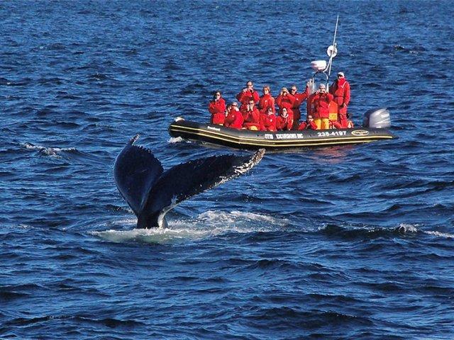 Cruzeiro de observação de baleias em Quebec